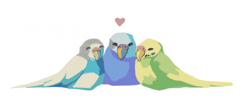 Budgies are social creatures and love to hang out with each other.