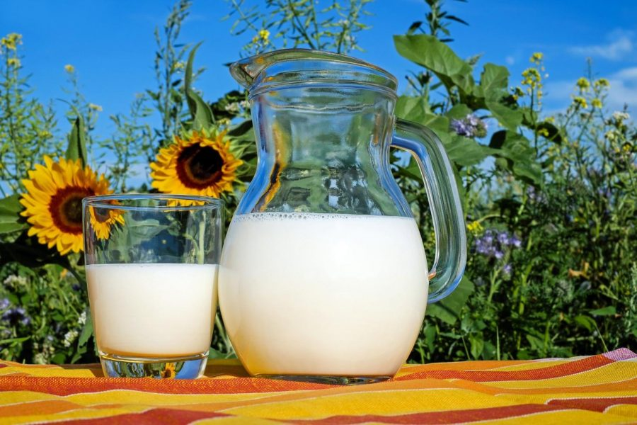 Plant-Based Milk or Cow Milk?