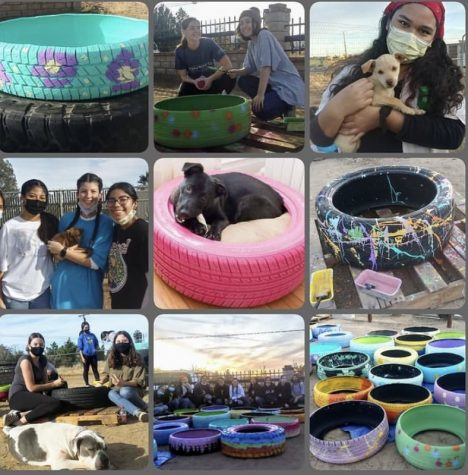 A collage of the Mutt Match event created by the lovely owner, Sheilah Aragon.