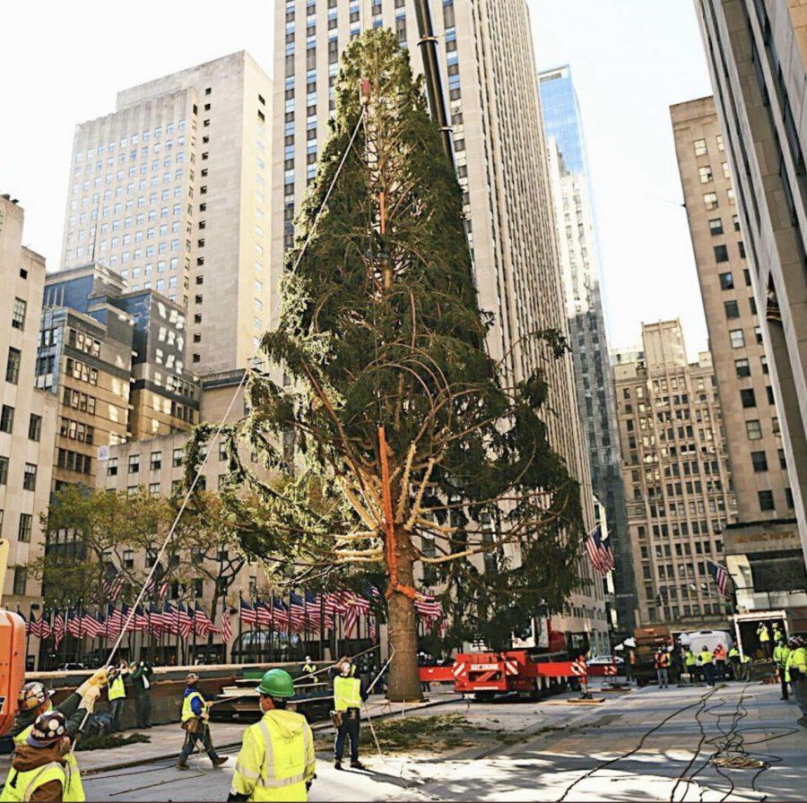 The 2020 Rockefeller Center Christmas tree.