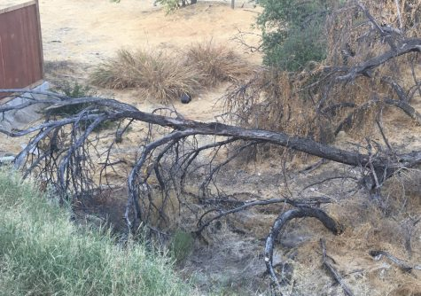 This once living tree is now burnt and dead due to a raging fire.
